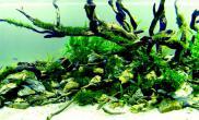 鱼缸水族箱水草缸大量造景沉木欣赏收藏