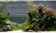 海外作品:120cm缸水草造景开缸记录