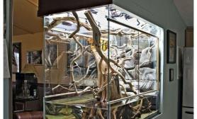 老外室内妖艳的大型生态雨林缸