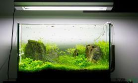 美丽的水草有化腐朽为神奇的功效哦鱼缸水族箱