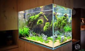 这个双面景蛮有意思的鱼缸水族箱