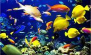 鱼为什么能够漂浮在水面上