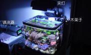 阿涛的40微珊瑚缸