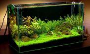 无水状态的草缸水草缸漂亮吧鱼缸水族箱