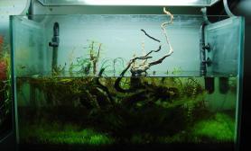 沉木造景变成水陆缸