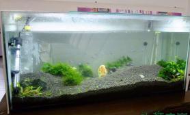 做了莫斯树鱼缸水族箱欢迎指导鱼缸水族箱
