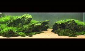 我的鱼缸水草缸两年以来的造景