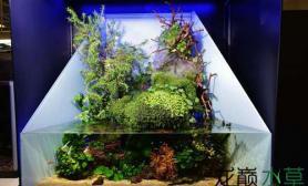 这种风格的水陆缸水草缸也非常有趣