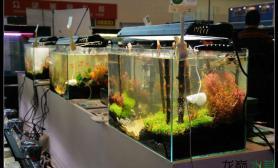 第十八届中国国际水族用品展览会(草缸篇)