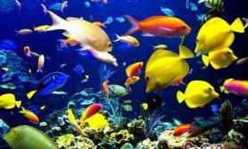 热带鱼混养的注意事项