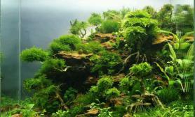 灌木丛林造景小组