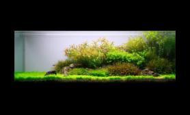 沉木青龙石水草造景150CM及以上尺寸设计18