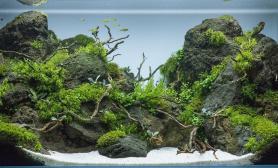 黑石头造景MOSS搭配水草90CM草缸