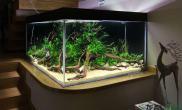 这就是方缸水草缸每个角度看上去都是那么漂亮鱼缸水族箱