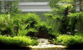 5个月成景历程水草缸总想和大家分享点点滴滴