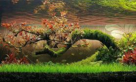 只有水草能做到水草缸断树也能开出花鱼缸水族箱