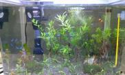水草造景在办公室养的小水族箱