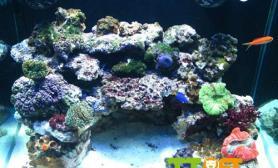 海水缸怎么养水有什么要注意的
