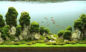 """超霸气的160 x 52 x 60cm 石景缸水草缸名为""""世界之柱"""""""