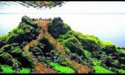 鱼缸造景火山爆发的水草缸