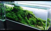 水草造景(120CM)viktorlantos