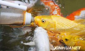 研究发现鱼类聪明超人想象(图)
