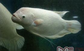 浅析热带鱼繁育的基本条件