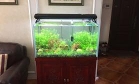 90升级120-------准新手大型总结水草缸欢迎讨论鱼缸水族箱(2图片18更新附开缸3个月照)