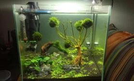 帮我瞅瞅树上这东西是绿藻么?咋整鱼缸水族箱