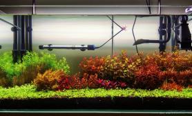 菜园子开缸17天水草缸请大家指点鱼缸水族箱