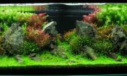 沉木青龙石水草造景150CM及以上尺寸设计30