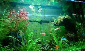 水草造景成长的快乐鱼缸水族箱