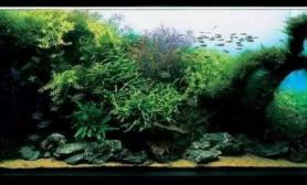 90缸想造个下面这个景水草缸请大神画个草图沉木杜鹃根青龙石水草泥
