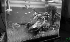 """新开缸水草缸取名""""树人""""鱼缸水族箱"""