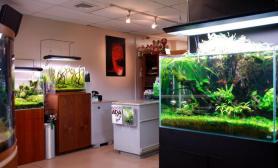 国外水族店-aquascapes