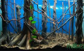 是草友的就进来瞧瞧水草缸要下就得下剧毒鱼缸水族箱毒的就是你鱼缸水族箱哈哈