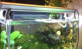 开缸两个多月了水草缸水总是不清透水草缸加了硝化菌更浑水草缸加了二氧化碳爬