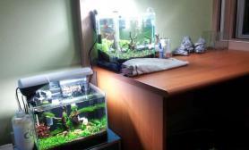 水族箱造景晒两个小缸鱼缸水族箱