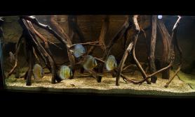 造景之路水草缸造景原生态鱼缸05