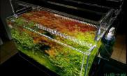 水族箱造景水草缸中的典范鱼缸水族箱