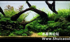 沉木、青龙石造景120CM附开缸教程
