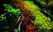 荷兰式造景120cm水草缸色彩艳丽品种繁多