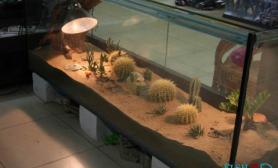 沉木青龙石动沙漠植物造景缸