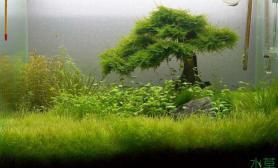 纯纯的莫丝树模式启动