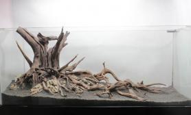 【方舟】沉木骨架---老树盘根