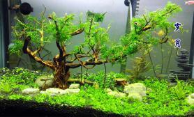 翻缸半个月水草缸也取个名字水草缸《岁月》沉木杜鹃根青龙石水草泥