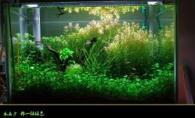 【水草造景篇】:水立方 那一抹绿色