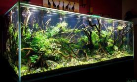 150cm沉木缸水草缸野味丛生