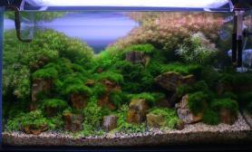 水草缸造景沉木水草泥化妆砂青龙石60CM尺寸设计73