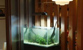 沉木青龙石造景缸与家装空间-17